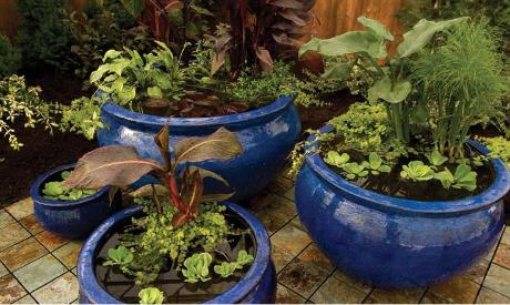 Water Garden Containers